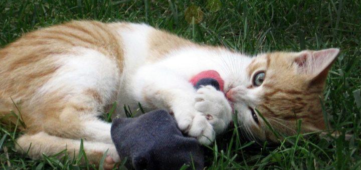 Cat Knee High Socks